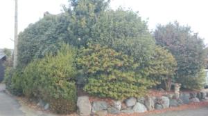 植木に覆われた庭