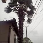 建物が真横にシュロの木
