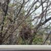 木の中にスズメバチの巣