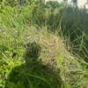 草刈作業前